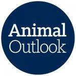 Animal Outlook